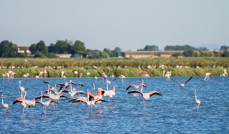 Erst das Putten auf dem Golfplatz und dann herrliche Flamingos bewundern: Golf Ferien in Cervia bieten einige Überraschungen für Besucher. (#1)